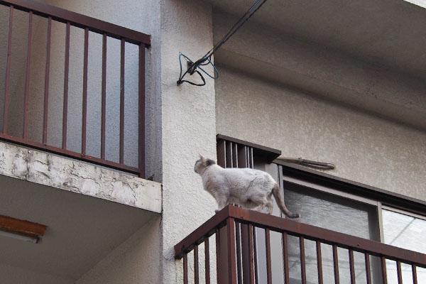 上を見る 柵の上のジュリ