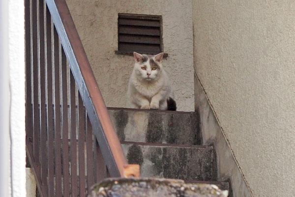 ちまっと階段の上に ジュリ