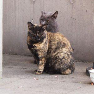 teitaku_2cats