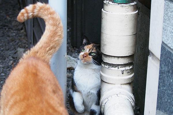 キラキラな目でカブのしっぽを見るリコ