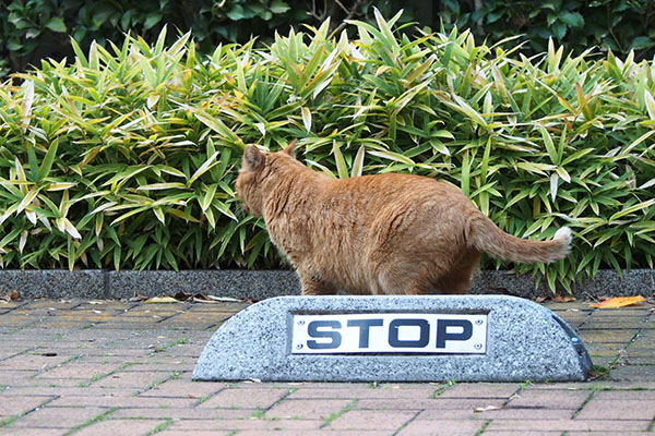 ポー stop