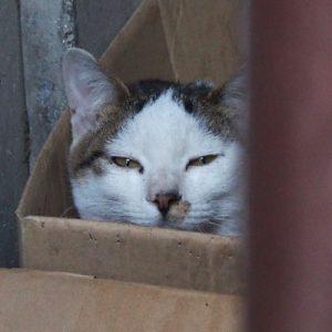 kochu in the box