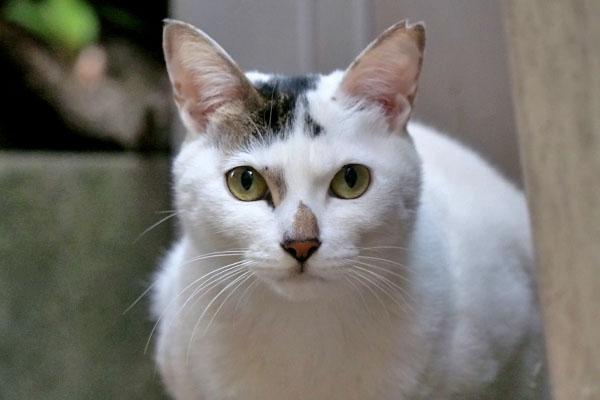 オーロラの目の色