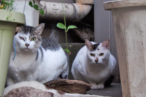 ふたりで見る ケイとオーロラ