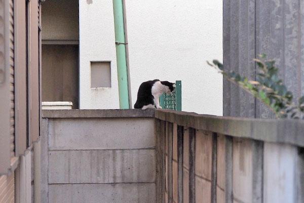 塀の上から下を見てるニコル