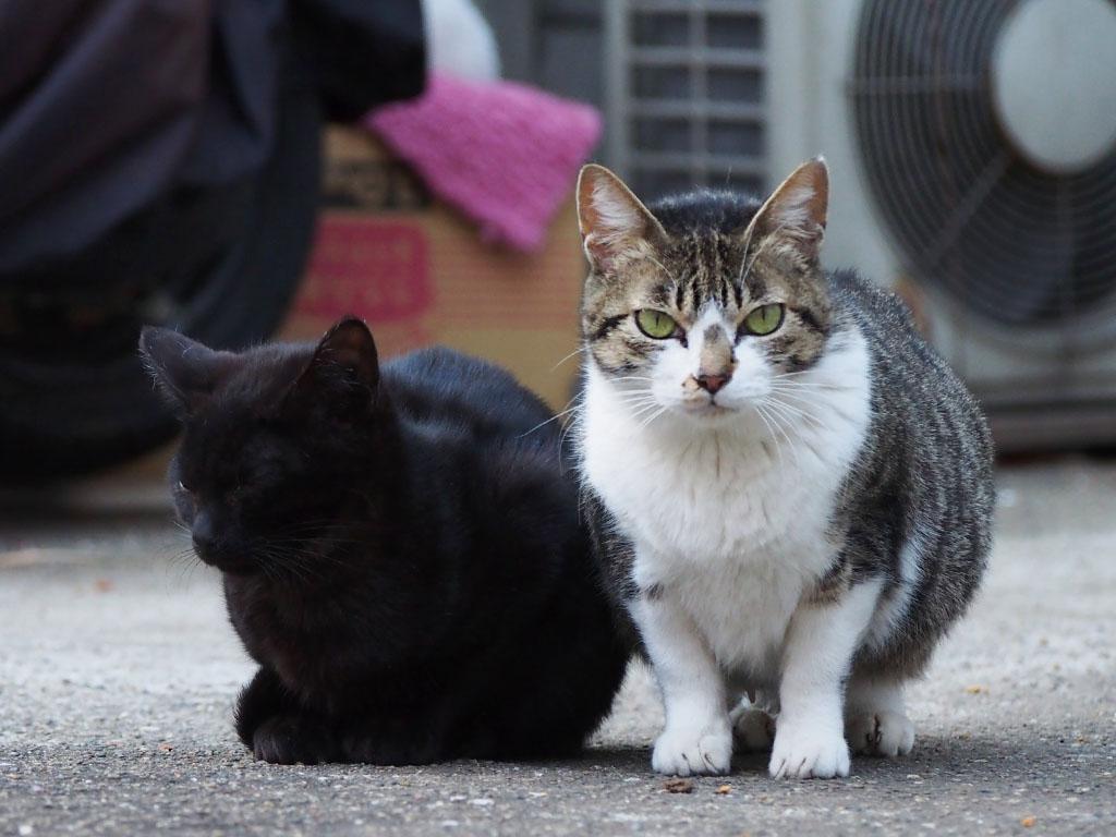 さくらと黒仔猫