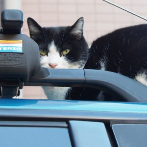 suzu on the car top