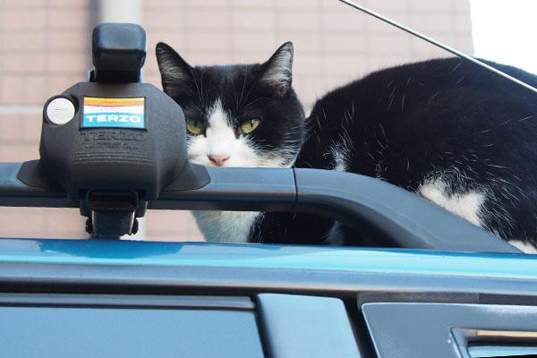 suzu on the car top