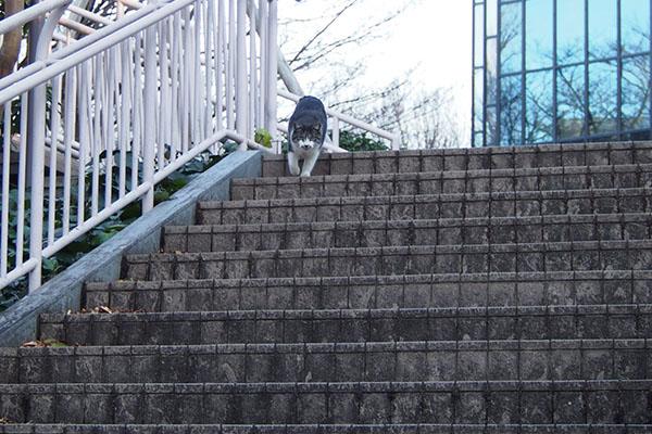 階段の上からタンタル登場
