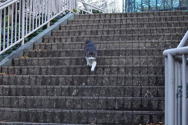 タンタル 階段の途中