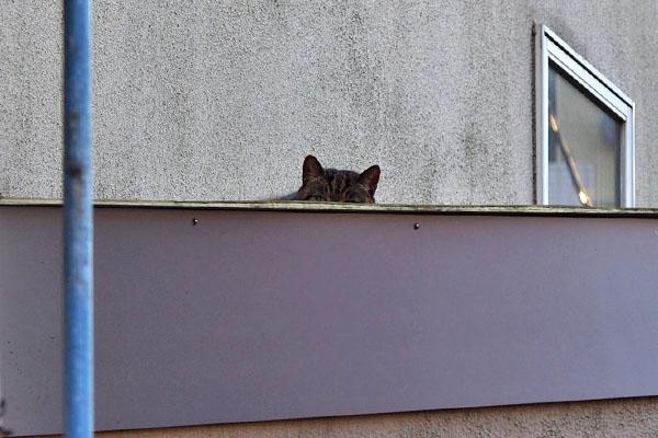 離れた屋根の上に猫耳