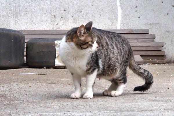 周りを警戒する母猫 さくら