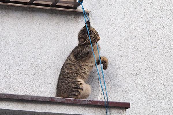 紐が気に入った シマコ