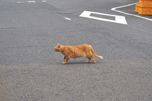 道路を横断する ひまわり