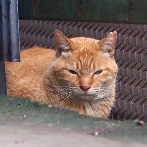 himawari angry face
