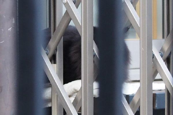 ふわふわな毛が見えた 黒猫 モフネ