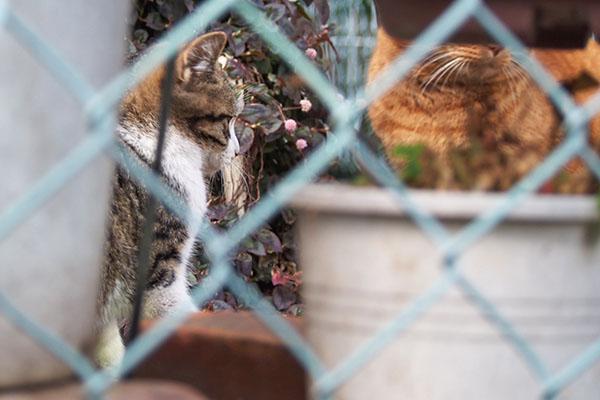 仔猫の横顔とチャーちゃんの一部仔猫の横顔とチャーちゃんの一部