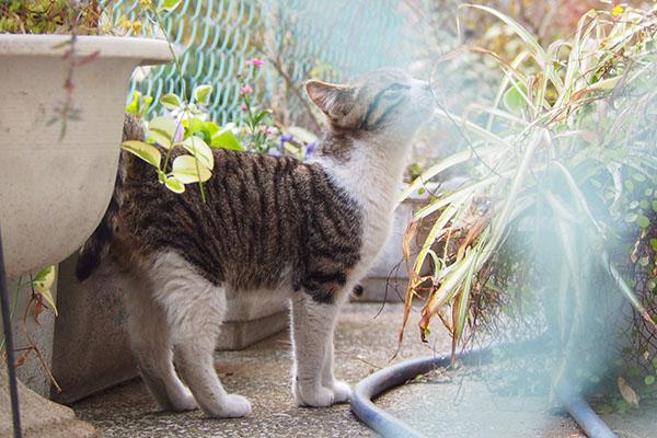 フェンスかぶり くんかくんか 仔猫