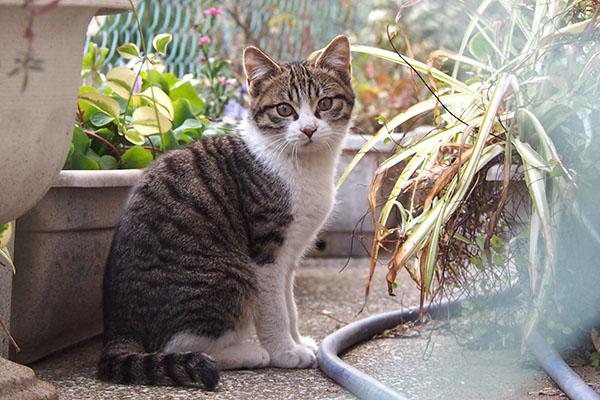 かわいい顔で 仔猫 全体