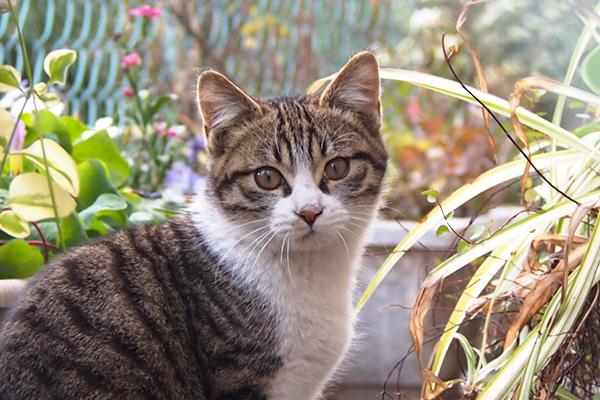 cute kitten face closeup