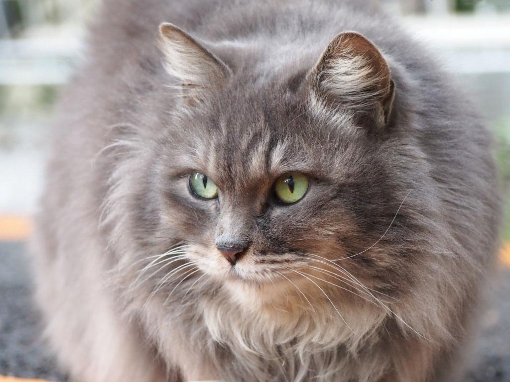mafu cute face and whisker