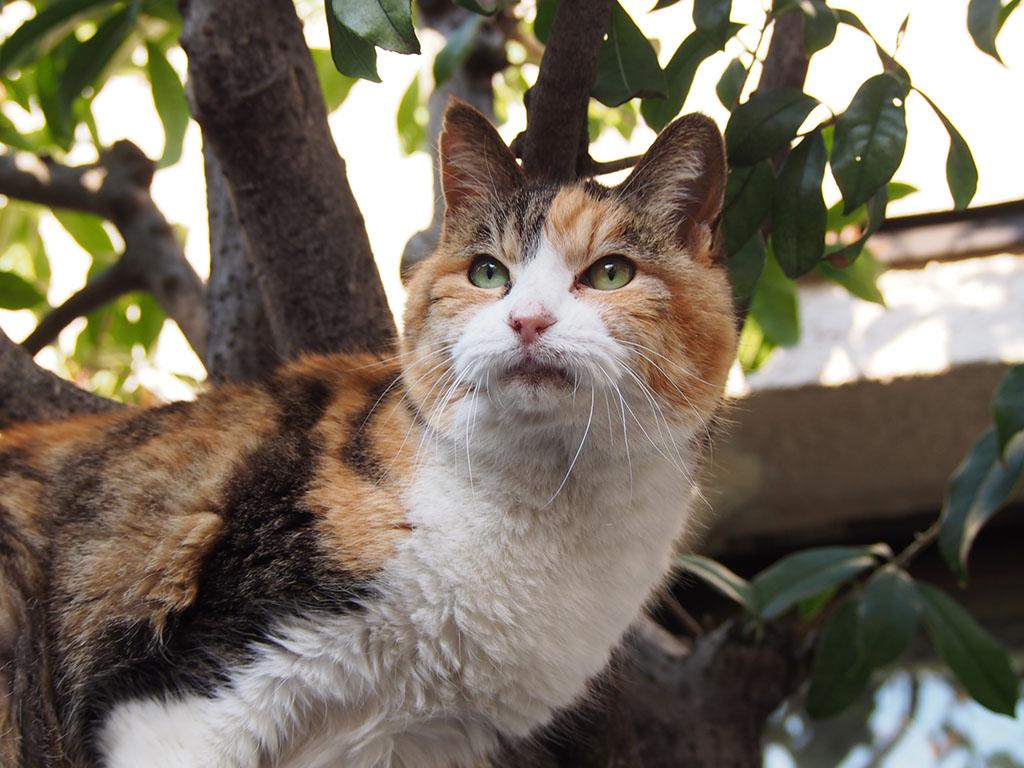 Otowa hi-mind cat