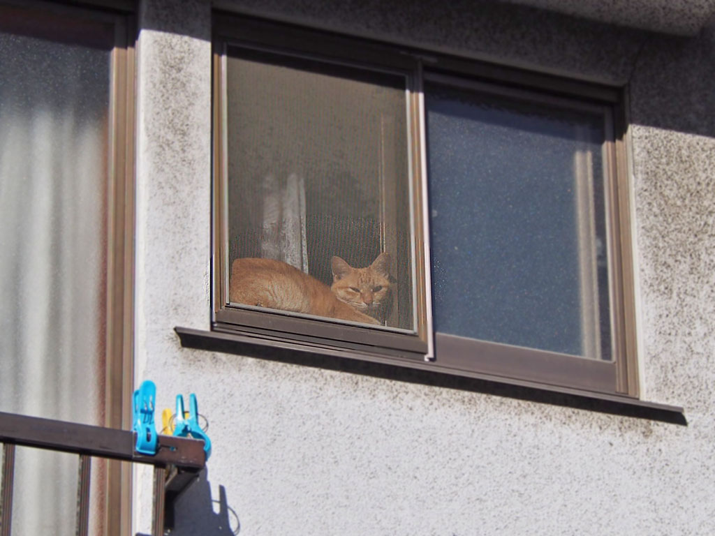 Sora sunbathing at window