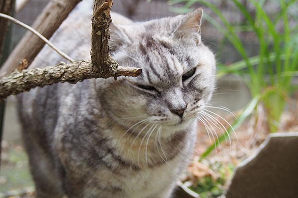 枝にスリスリ 銀
