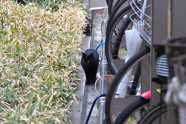 黒猫さん発見1