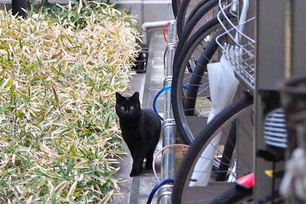 黒猫さんこちらを見る