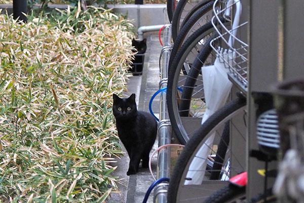 後ろにも黒猫さんいる