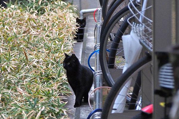 横向く黒猫さんと後ろのコ