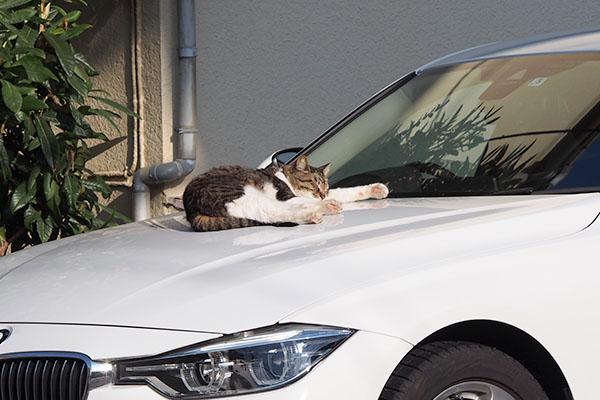 誰かの車 リオ君が寝ている