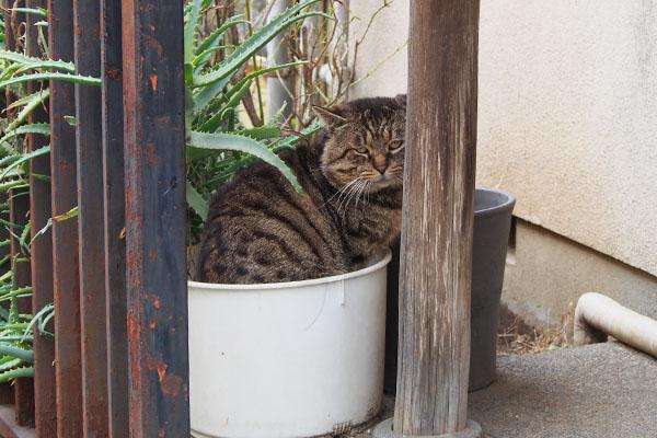 Roki in the Pot