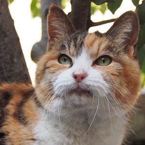 Otowa beautiful face