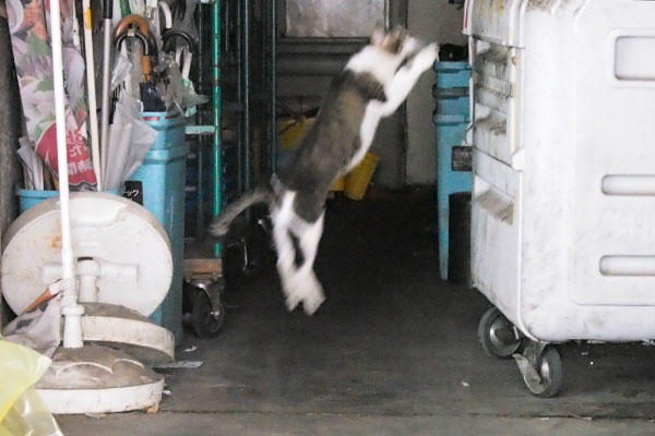 跳ぶ オンブレ