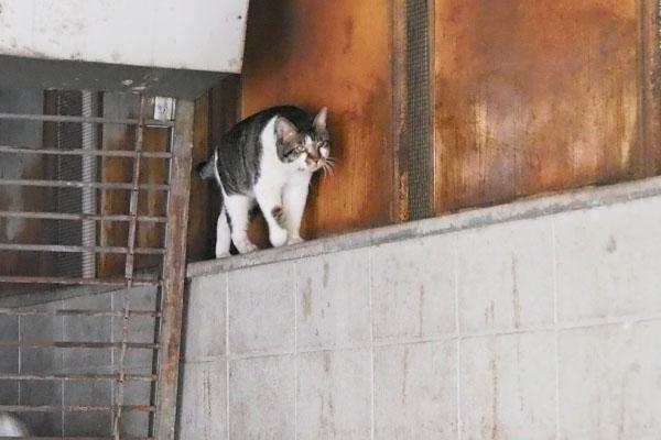 塀の上 オンブレ