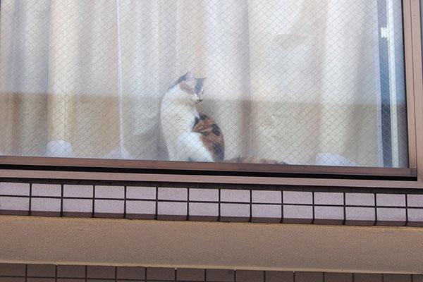 三毛猫さん 窓辺 横