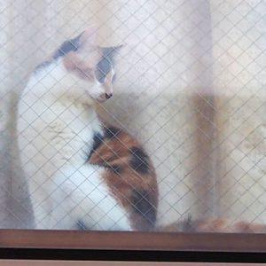 calico housecat as window