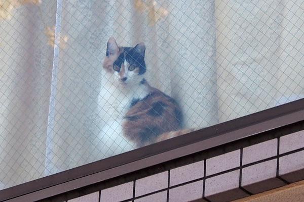 三毛猫さん 窓辺 お顔