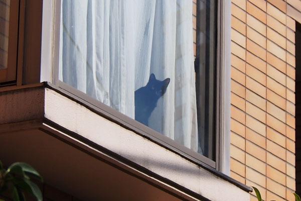 黒猫さん 窓辺 戻って