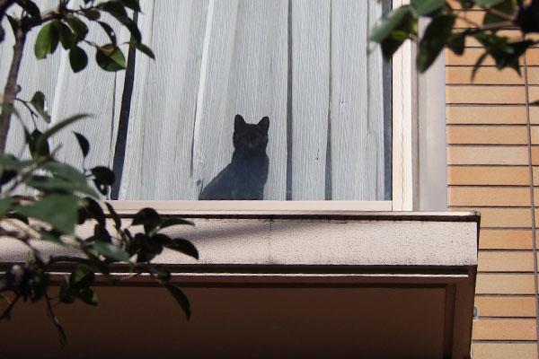 黒猫さん 窓辺 正面