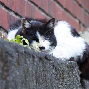 karu sleeping