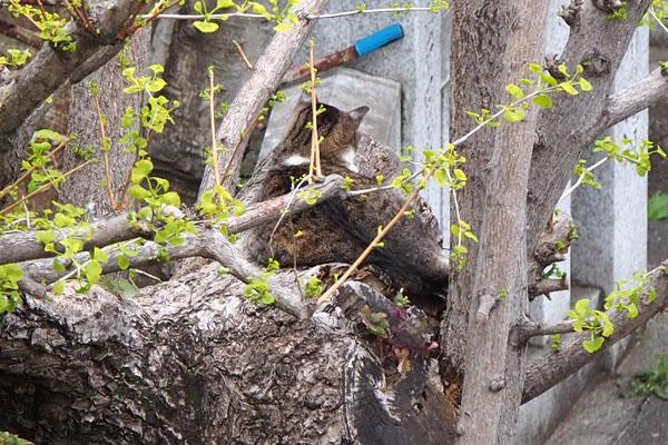 雫 イチョウの木の上 ズーム
