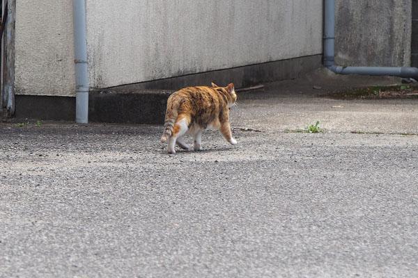 走る三毛猫さん