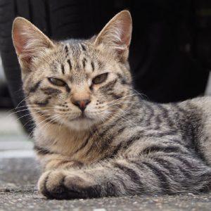 shimawo grumpy face