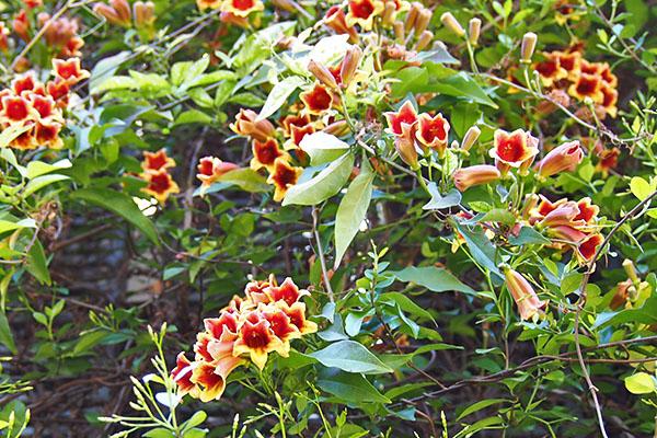 flower red troop