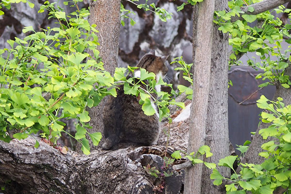shizuku on the tree