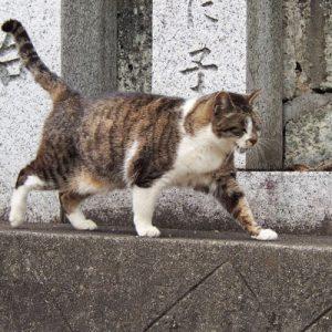 shizuku walking