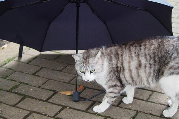 傘の下に居るにゃ クロム